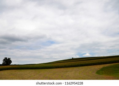 A field in a rural area of Virginia on a summer day.