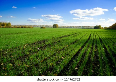 Field of rye in the autumn