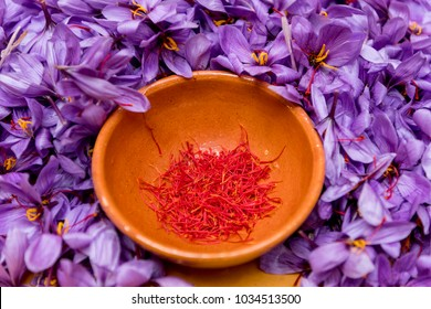 Field of saffron. Process and manipulation