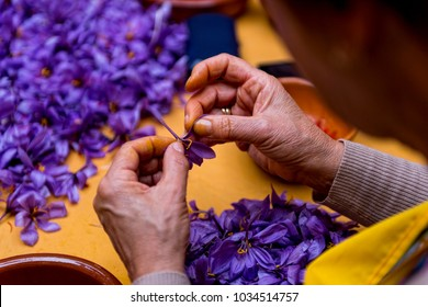 Field of saffron, process and manipulation