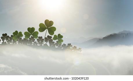 field of shamrocks in mist