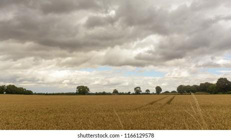 Field in Somerset England A, Cloudscape before Rain, summer 2018