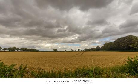 Field in Somerset England B, Cloudscape before Rain, summer 2018