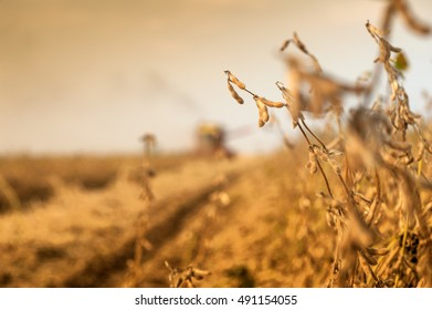 Field at soybean harvest time