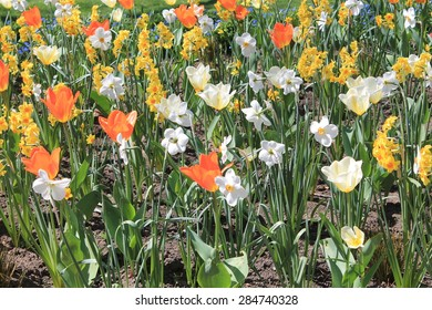 Field of Spring Flowers
