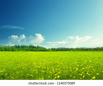 field of spring flowers and perfect sky