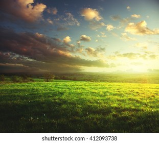 field of spring grass and forest  in sunset time