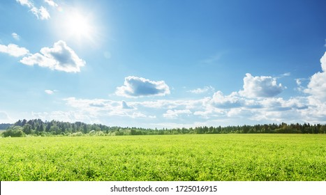 field of spring grass and perfect sky - Shutterstock ID 1725016915