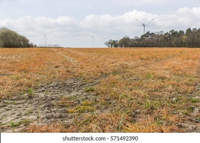 Field in spring, which has been treated with weed killers / herbicide / arable land