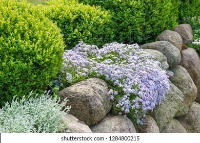 Feldsteine und Pflanzen im Garten