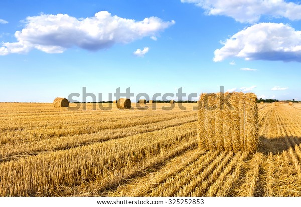 A field with straw bales after harvest on the sky background
