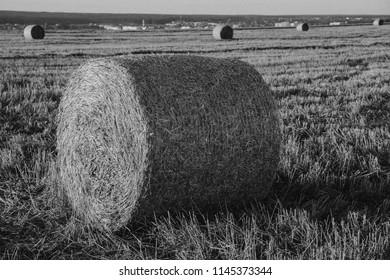 Field straw summer