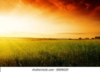 field of summer grass and sunset