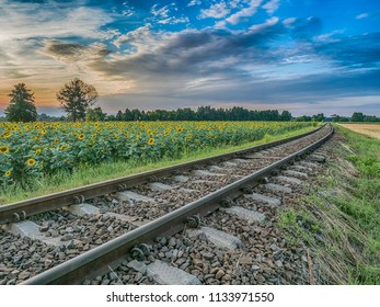 Field of  sun flower next to  the railroad tracks during the sunset