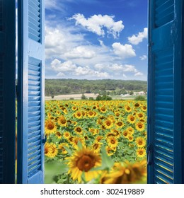 Field of sunflowers at bright summer day