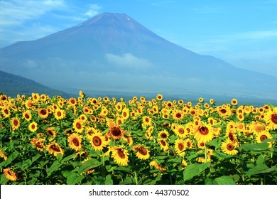 A field of sunflowers with Mount Fuji in the background