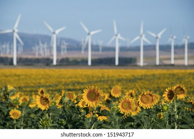 Field of sunflowers with wind turbines in the background - alternative, clean energy