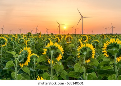 Field of sunflowers, windmills in the background, sunny sky