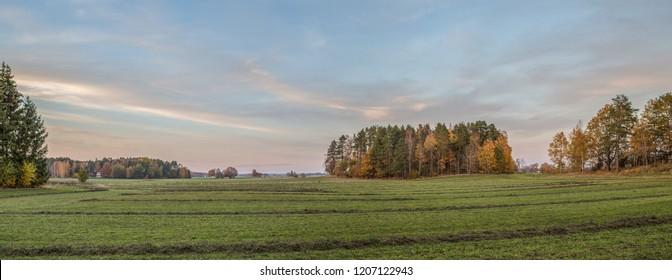 Field at sunset in Scandinavia