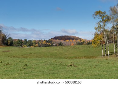 A field surrounded by a forest
