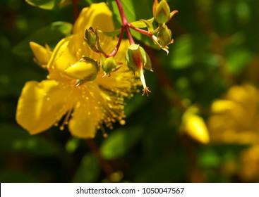field Thistle flower, field flower in backlighting, reschovsky meadow wild flower