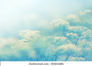 A field of tiny blue flowers, vintage cool tone and shallow deep of field.
