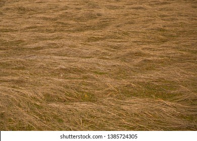 field with trampled yellow grass
