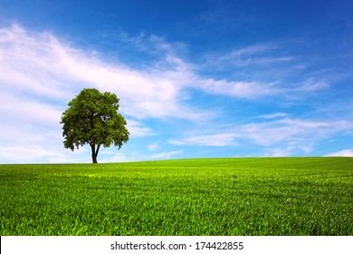 Field and tree and blue sky