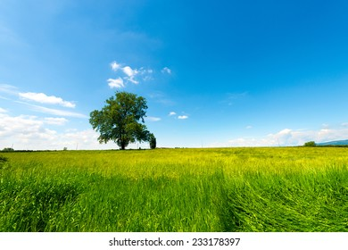 Field, Tree and Blue Sky / Leafy lone tree in the countryside with blue sky and clouds