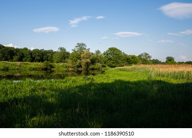 field with tree and the reflection in river - natural light