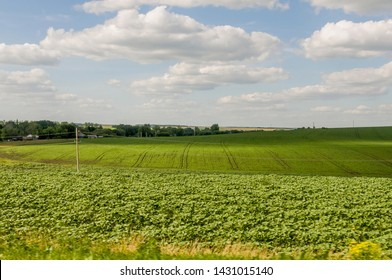 The field with trees far away. Cultivated area. Agriculture. Bright blue sky and green grass