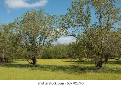 field with trees and yellow flowers