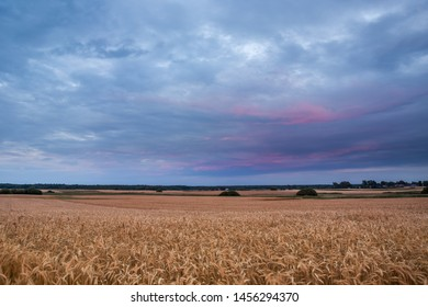 Field of triticale and colorful rainy clouds. Czulczyce, Poland