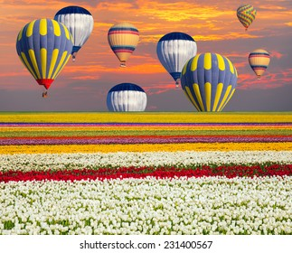 field of tulips against hot air balloons