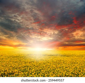 field of unfocused sunflowers and sun in the blue sky.