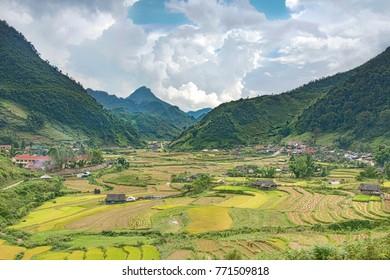 field in Vietnam