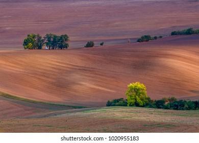 Field wave patterns in Bohemia (Czech Tuscany)