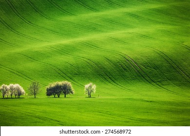 Field waves with blossoming trees in the spring, South Moravia, Czech Republic