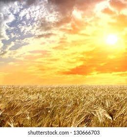 Field of wheat and cloud in the sky
