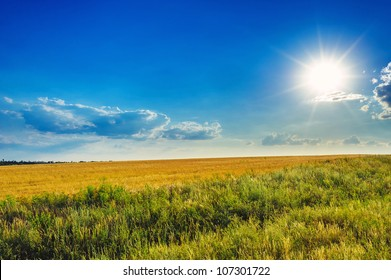 Field of wheat,  evening sky and sun. Sunset. Green planet - Earth