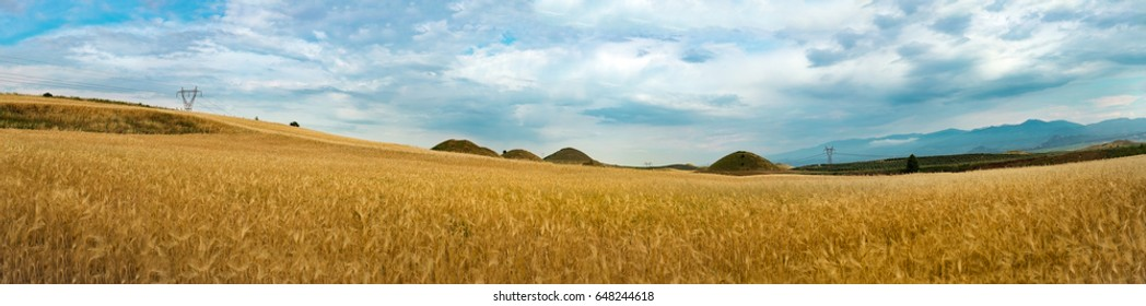 Field of wheat, next to historical tumulus graves panorama view. Bintepeler, Salihli Manisa