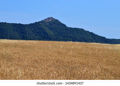Field of wheat on the mountain slope