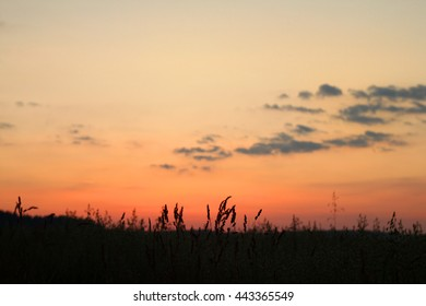 a field of wheat at sunset