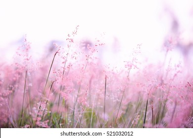 Field of whispers. Beautiful Australian scene of a field of pink tipped grass. Very dreamy and romantic soft feel.