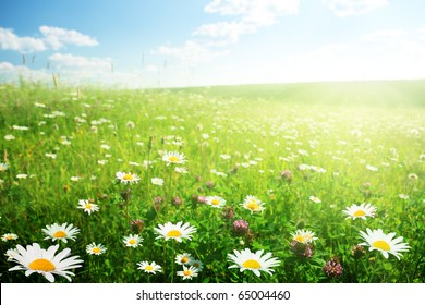 field of wild flowers