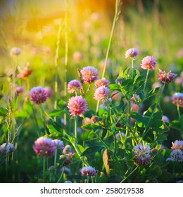 Field of wild flowers and sunset