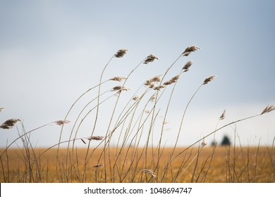 field of wild grass blowing and waving in the wind with bright sunlight looking like an arable crop