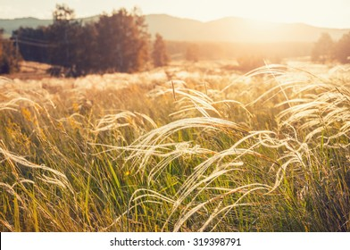 Field with wild grasses at sunset. Selective focus. Beautiful summer landscape, rural nature.