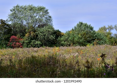 A field of wild plants with a colorful tree line in the distance.