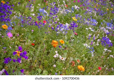 a field with wildflowers
